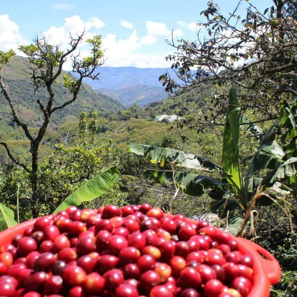 Colombia Buesaco cafe con altura