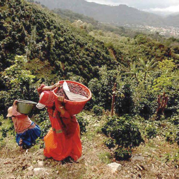 Costa-Rica-Naranjo-2